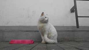 Ismerje meg Túrót, a benzinkutas macskát!