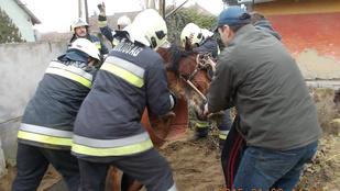Vízóra aknába esett lovat mentettek a tűzoltók