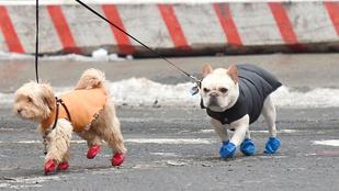 Hugh Jackman kutyái cipőben is cukik