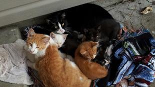 Ezekkel az állatokkal találkozik munka közben egy missouri postás