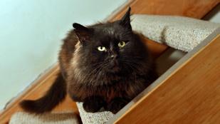 Tizenhárom igazi macskarohadék