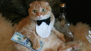Íme tíz remek macskás blog