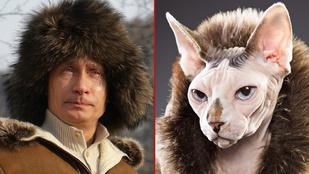 Ezek a macskák pont olyanok, mint Putyin