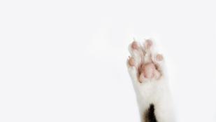 Malcolm macska 8 év után hazatért