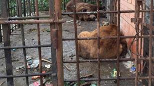 Kiszabadították az alkoholista medvéket az orosz étteremből