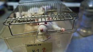 Majdnem a duplájára nőtt az állatkísérletek száma Amerikában