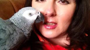 Elrabolták a rappelő táncos papagájt