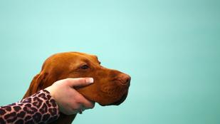 7 tökéletes kép a legnagyobb kutyakiállításról