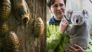 Hagyjuk a koalákat, itt vannak az Állatkert mostohái