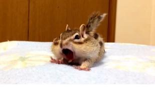 Csinálja azt a hétvégén, amit ez a mókus