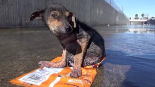 Sírásveszély: egy szörnyen megkínzott kiskutya megmentése