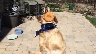 Szupercukiság: Fritz, a kutya, aki semmit sem tud elkapni