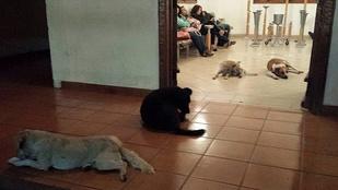 Jótevőjük ravatalánál gyászoltak a kóbor kutyák