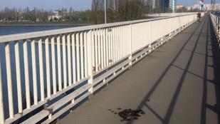 Az Árpád hídra kakilt valami vagy valaki