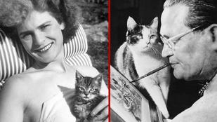 Nézegessen híres művészekkel pózoló macskákat