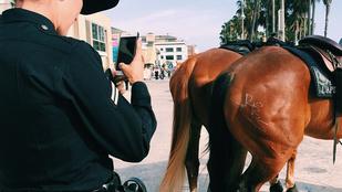 Ki az az idióta, aki összefirkál egy lovat?