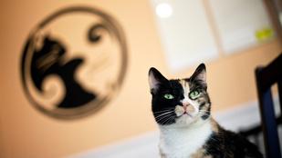Macskákkal sokkal jobb kávézni