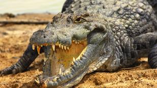 Basztatta az aligátort, az meg megharapta
