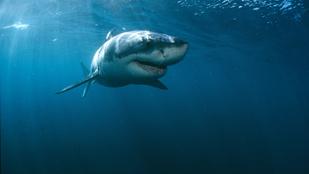 Észak-Karolinában már 7 embert támadtak meg a cápák idén