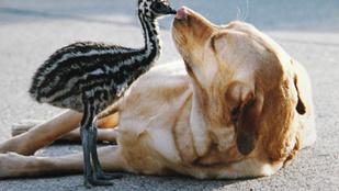Emut üldöztek egy angliai város utcáin