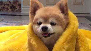 Rihanna rántottaruháját egy kutya emelte magasabb szintre