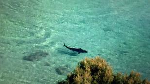 CÁPÁT!!! vagy tonhalat láttak Mallorcánál