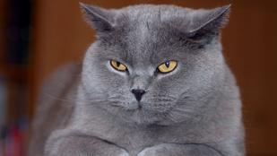 49 napig nem evett és ivott a macska, de túlélte