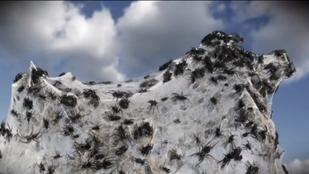 Ausztráliában pók esik az égből, de ez tök normális