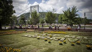 40 ezer virág nőtt a Március 15. térre