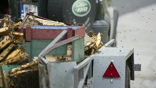 Méhinvázió az M3-ason
