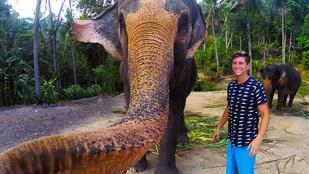 Csudamenő szelfit készített az elefánt