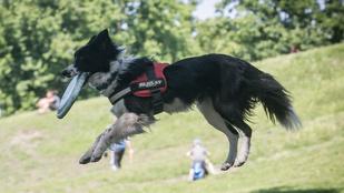 A kutyamajálist legkevésbé a kutyák élvezték