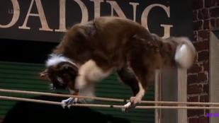 Újra kutya nyerte a britek kedvenc tehetségkutatóját