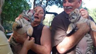 A pillanat, amikor megtudod, hogy nem kutyát, hanem egy tigriskölyköt tartasz a kezedben