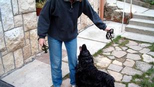 Magyar kutatók fordíthatnak kutyáról emberre