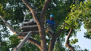 Nem volt jó napja annak a munkásnak, aki egy 14 méteres fán rekedt