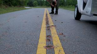 Az igazi horror: gilisztakupacok leptek el egy utat Texasban