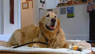 Busz elé vetette magát egy kutya a gazdáját mentve
