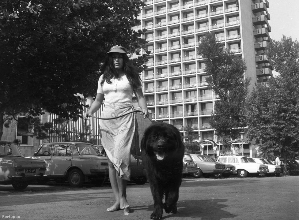 """A siófoki Hotel Európában 1971-ben a kép tanulsága szerint még meg lehetett szállni kutyával, és nyugodtan lehetett sétálgatni a blökivel a Petőfi sétányon vagy közvetlenül a vízparton. Ma ez már bajosan menne, a természetes fürdővizek minőségi követelményeiről, valamint a természetes fürdőhelyek kijelöléséről és üzemeltetéséről szóló 78/2008. (IV. 3.) kormányrendelet szerint ugyanis """"állatot a fürdőhely területére bevinni – a kistérségi intézet által engedélyezett őrkutyás biztonsági szolgálat, illetve a vakvezető kutya kivételével – tilos."""" Kijelölt fürdőhelyek alatt pedig nemcsak az elkerített, klasszikus strandokat kell érteni, hanem minden olyan partszakaszt, ahol tábla jelzi, hogy az adott vízterületet az ÁNTSZ fürdésre alkalmasnak találta (jellemzően a májustól szeptemberig tartó időszakra). Régen minden jobb volt?"""