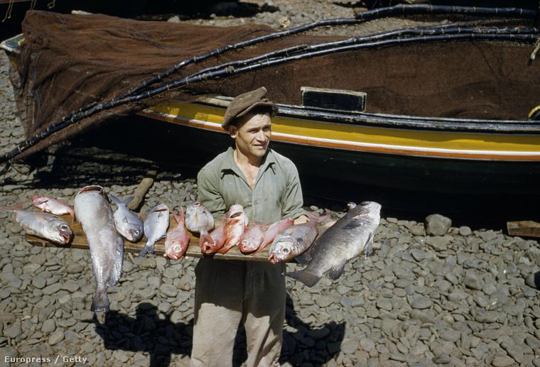 Portugál halász az 50-es évek végén, a kép bal oldalán az a nagy hal egy hekk