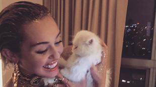Miley Cyrus arcpakolásban táncol és cicával cukiskodik