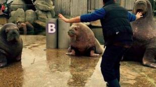 Őslényidomárként pózolnak az állatkerti gondozók