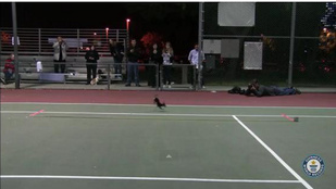 Nehéz szavakat találni a két lábon világrekordot futó kutyára
