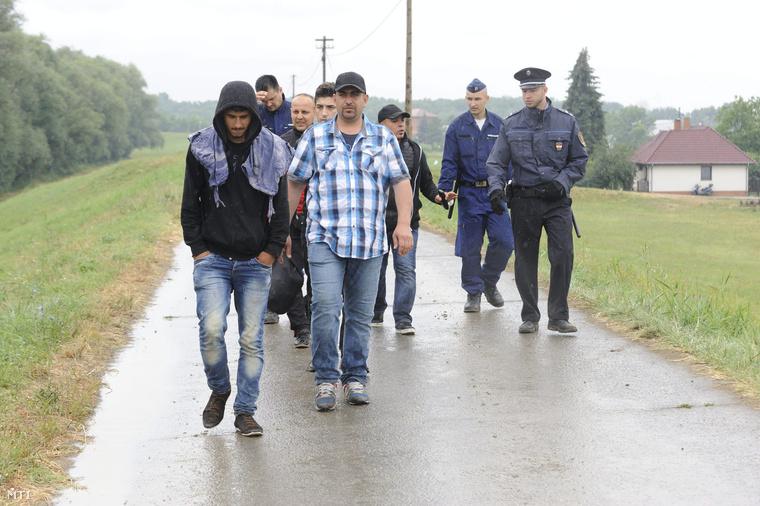 Rendőrök vezetik a határsértőket akiket a Tisza árterében Szeged közelében fogtak el 2015. június 24-én.