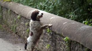 A híd, ahonnan a halálba vetik magukat a kutyák