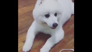 Itt egy kutya, aki kacsának képzeli magát
