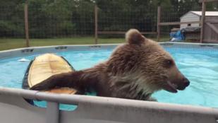 Nincs boldogabb lény a medencében pancsoló medvénél