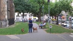 Lázadt egy kutyás néni a Bakáts téren