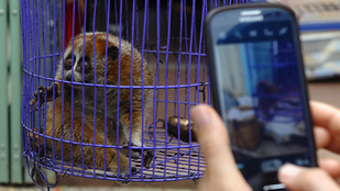 Tudta, hogy cuki lajháros videók nézegetésével az állatkínzást támogatja?