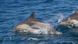 Semmi, csak egy delfin vérfürdőt rendezett Orange Countyban